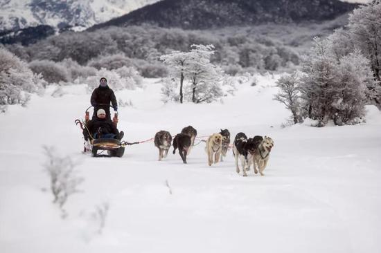 乌斯怀亚的狗拉雪橇