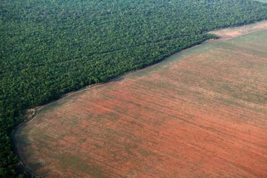 2015年10月4日在巴西马托格罗索州拍摄的亚马孙雨林(左)和被砍伐后准备种大豆的土地(右)。路透社