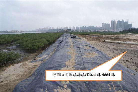 海南宁翔实业有限公司围填海填埋红树林。图片来源:生态环境部