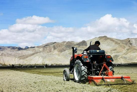 2020年5月4日,雅鲁藏布江及其主要支流年楚河的汇流处河谷地带,农民在农田里辛勤劳作。新华社记者 沈虹冰 摄