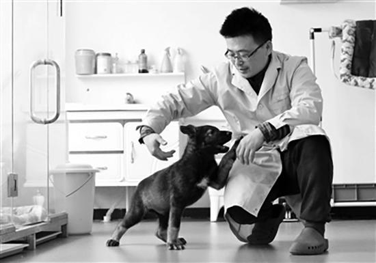 """两个月大的克隆警犬""""昆勋""""与实验工作人员嬉闹。科技日报 图"""
