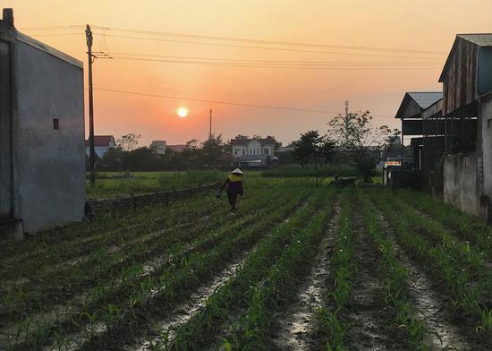 临近傍晚,一位农民在房屋之间的农田里干活。