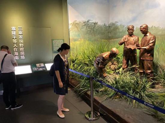 还原了袁隆平研发杂交水稻时的场景。新京报记者 王巍 摄