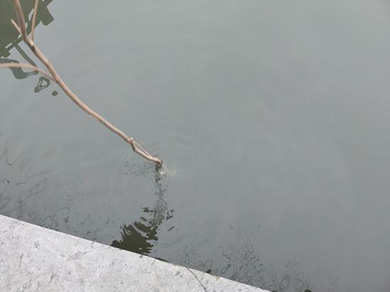 2月19日,黄家风用棍子探入出事的河底,水深不足四十公分。