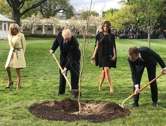 """2018年4月,特朗普与马克龙在白宫南草坪合力种下这棵""""友谊之树"""" 图源:路透社"""