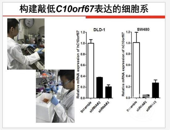 ▲陈某石同学在基因实验中。图片来源/全国青少年科技创新大赛官网