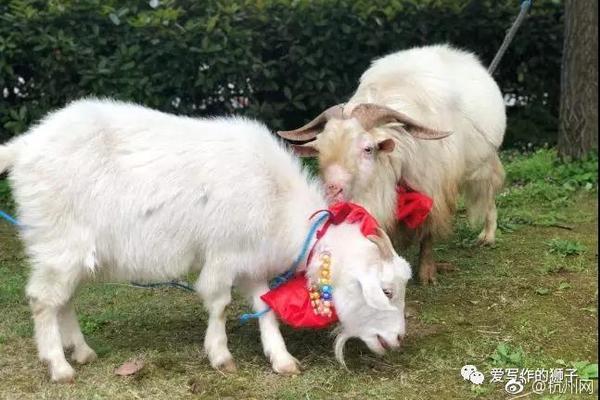 果洛藏族自治州