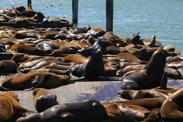 全面禁食野生动物:该不该、行不行?