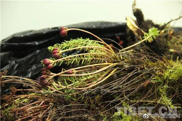 《第一炉香》剧照曝光 彭于晏被吐槽像车夫