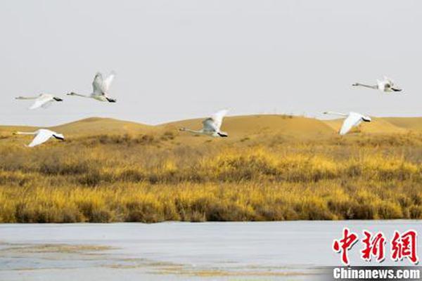 劉國梁痛批樊振東:別再捧殺 他還不具備冠軍氣質