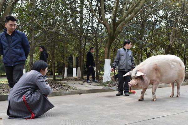 陈赫邓超相约打篮球感情好 二人身姿矫健活力满满