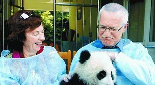 2004年4月20日,捷克总统克劳斯配头鉴赏成都大熊猫繁育钻研基地。