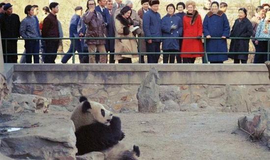 1972年,美国总统尼克松在访华时代携夫人旁观熊猫。