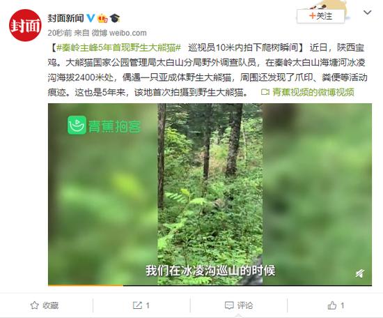 秦岭主峰5年首现野生大熊猫 巡视员拍下爬树瞬间