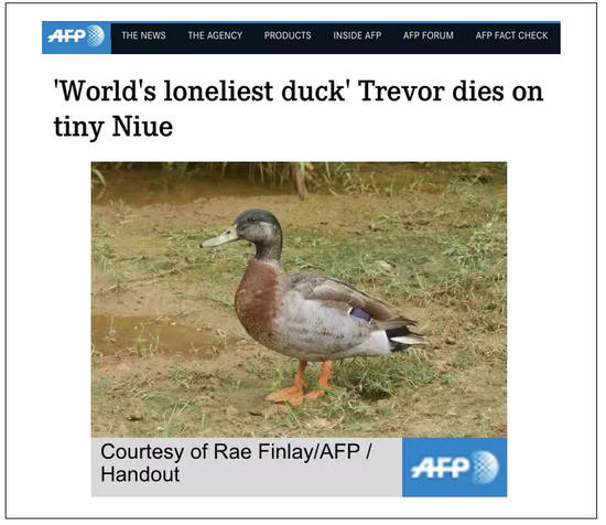 最孤独鸭子被咬死怎么回事 为什么说是最孤独鸭子?