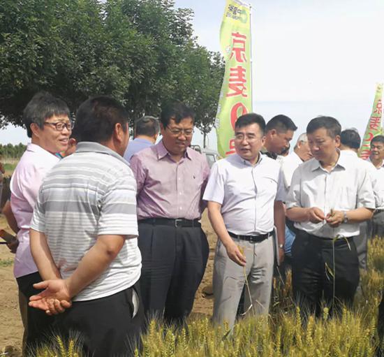 雜交小麥示范觀摩現場,右二為中種雜交小麥種業(北京)有限公司總經理陳兆波。