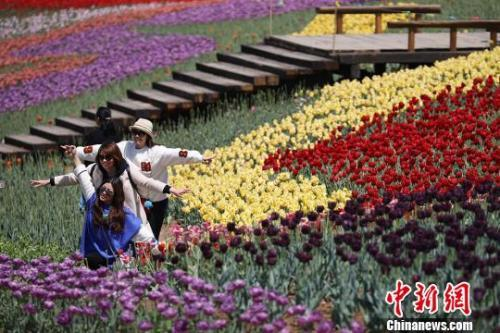 4月7日,民众在南京郊区一处郁金香园内踏青赏花。泱波 摄
