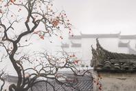 摄影:随心而遇 秋之美