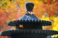 美图:路遇静美深秋