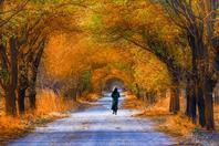 多彩的秋景因为有你才美丽