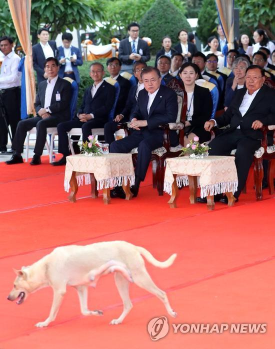 5日,神秘白狗闯入韩国与老挝领导人会场(韩联社)