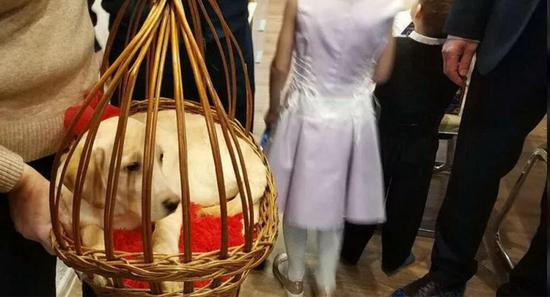 普京給12歲殘疾女孩贈送金毛犬 幫助其特殊治療