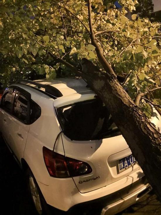 蔡先生的車被樹砸中 大河報 圖