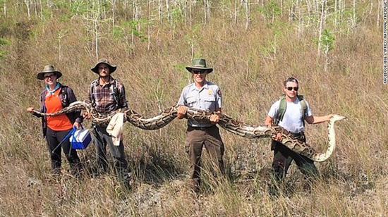(巨型蟒蛇。来源:大柏树国家保护区脸书)