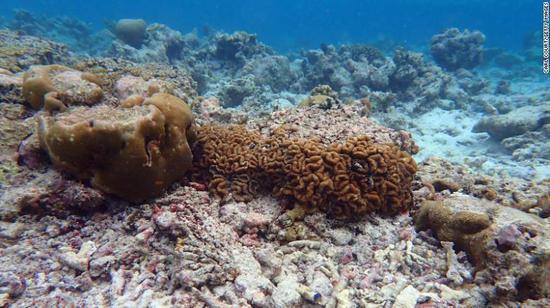 水温升高等海洋环境变化造成马尔代夫部分地区珊瑚礁失去90%。图据CNN