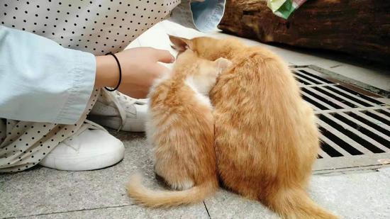 记者之前遇到的法源寺里生活的小猫