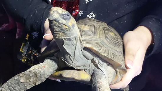 45岁乌龟打翻床灯引发火灾,被消防救出后一脸不爽的样子。(图源:福克斯新闻网)