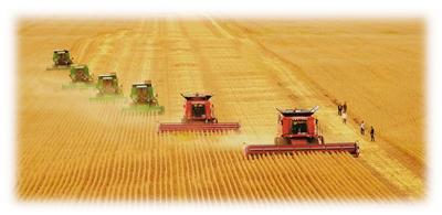 图为黑龙江垦区友谊农场五分场二队大机械联合收获大豆。黑龙江垦区今年的大豆种植面积达到1038万亩。英国《泰晤士报》网站日前报道称,为了摆脱对美国进口大豆的依赖,中国政府支持黑龙江农民种植大豆。徐宏宇摄(人民视觉)