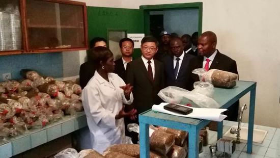2019年9月11日,中非共和国总统图瓦德拉(右1)参观由福建农林大学菌草专家指导建立的中非首条菌草种菇技术生产线。新华社发