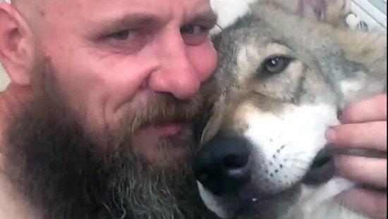 人狼共舞!俄一名医务人员和女儿、两只狗和狼崽住在一间一室公寓