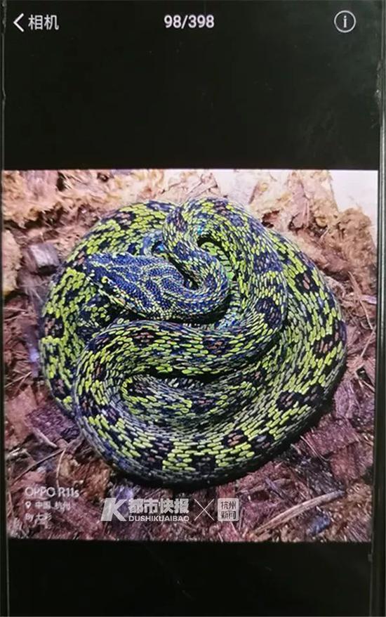 照片里的蛇就是这个少年家里的宠物蛇
