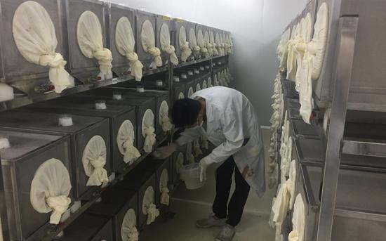 8月13日,研究人员正在成蚊车间进行日常检查。 新京报记者 韩沁珂 摄
