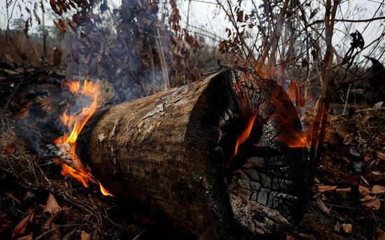 当地时间9月5日,巴西亚马孙州阿普伊,雨林大火之后,树木被烧焦。