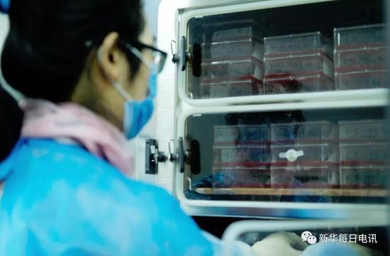 屠呦呦�F�研究人�T���B殖有��原�x的血液�Υ娴奖�箱中。新�A社�者 孟菁�z