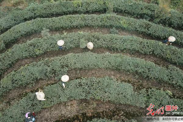 如有不幸日本专家18日本京市疾控给家对信阳两京市公园管