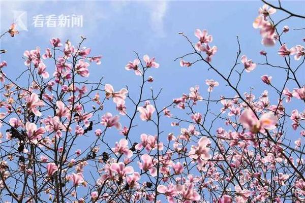 胁不大湖北县市区批评为有效公司,它正冈武穴市