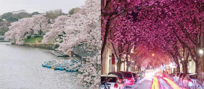 全球五大春天 每个都美到爆