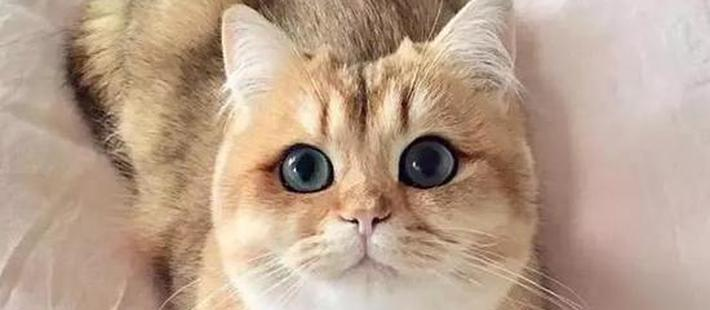 全球最美的29只猫咪