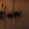 心之境 羽之魅——王智摄影作品展在中国摄影画廊开幕