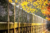 摄影:秋日如画 美景如诗