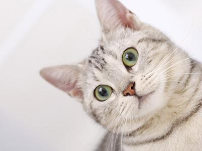 吃死猫的眼睛_猫咪眼睛明亮的秘密,谷登DHA牛磺酸片新装来袭_新浪青岛_新浪网
