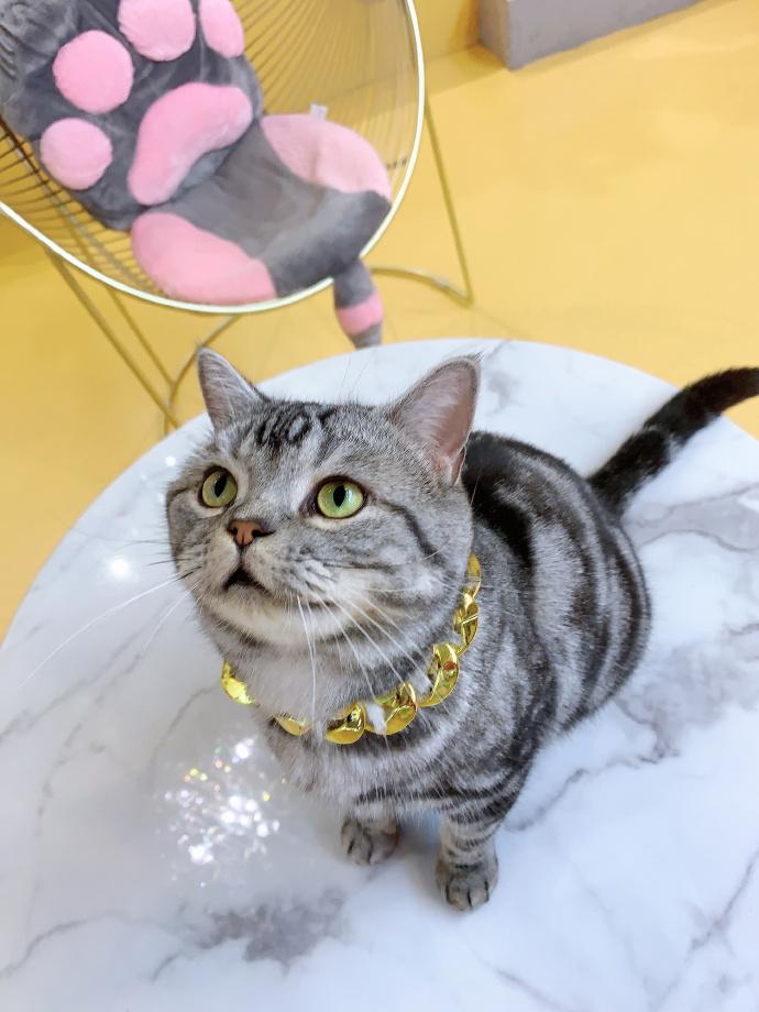 #乐在济南# 当咖啡馆和饮品店被喵星人占领,又是怎样的景象呢[憧憬][喵喵][喵喵]一起来这几家店撸猫吧[爱你][爱你]🥤 👉#k161萌猫咖啡##遇见猫##糯米喵星人##停车场变停猫场# 