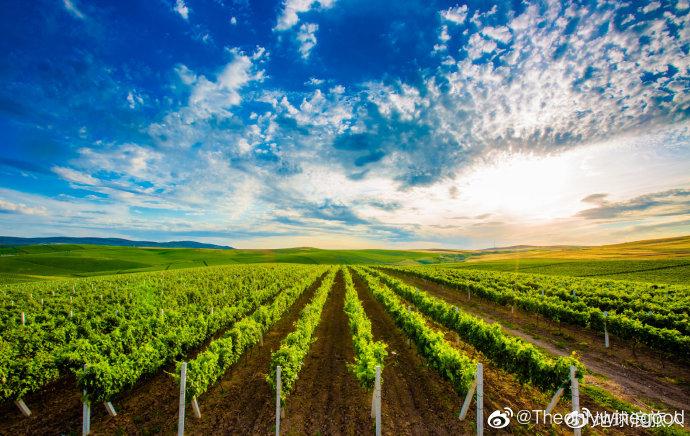 """#中国驻阿塞拜疆大使馆发布安全提醒#关注事态的发展,因为阿塞拜疆也是一个有名的葡萄酒生产国,而且葡萄酒生产历史非常悠久,还是现代葡萄栽培技术的摇篮地。  来自阿塞拜疆当地坊间的传说,诺亚在""""创世纪""""的洪水暴发后幸存了下来,并为了酿造葡萄酒开垦出第一个葡萄园,而这个神秘的葡萄园,就在阿 """