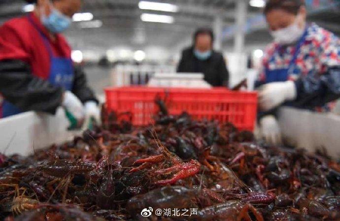 成都吃货威武!18万斤湖北小龙虾流入成都餐桌 购买量全国第一