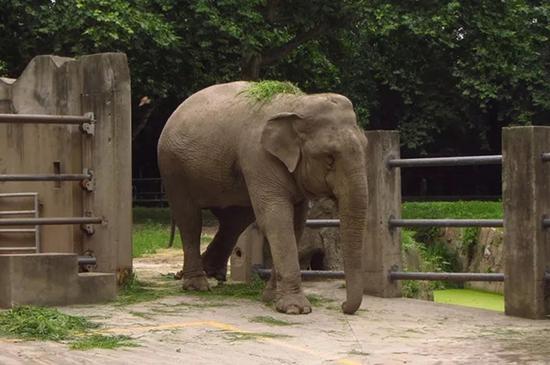 亚洲情色动物与人_亚洲象版纳因救无效死亡与几代上海人记忆相伴_新浪上海_新浪网