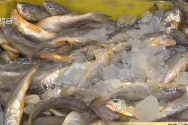 视频:春节临近海鲜丰富 市场价普涨两到三成